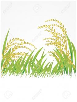 Cereal clipart rice crop