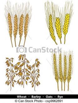 Oat clipart barley
