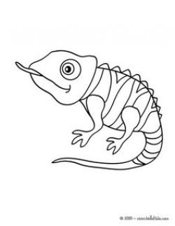 Cameleon clipart coloring page