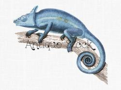 Chameleon clipart draw a