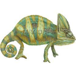 Chameleon clipart face