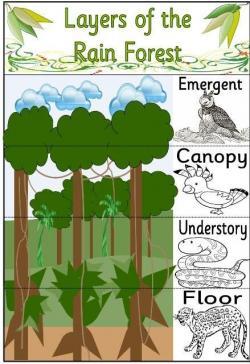 Savannah clipart rainforest tree