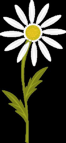 Daisy clipart chamomile