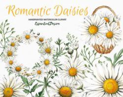 Camomile clipart daisy