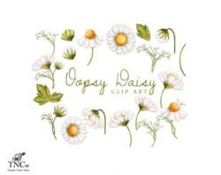 Rustic clipart daisy