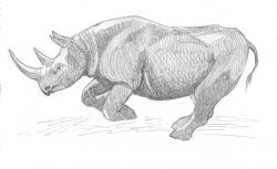 Charging Rhino clipart Charging Rhino Drawing