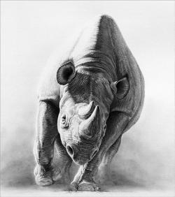 Charging Rhino clipart