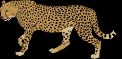 Ocelot clipart cheetah