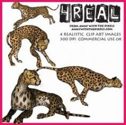 Bonobo clipart cheetah