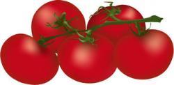 Cherry Tomato clipart bush