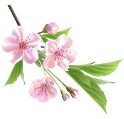 Blossom clipart sympathy flower