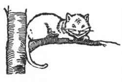 Cheshire Cat clipart the tree