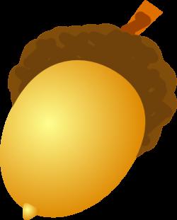 Chestnut clipart acorn