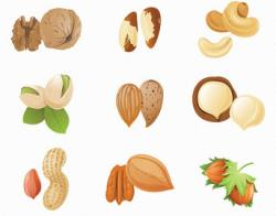 Cashew clipart mixed nut