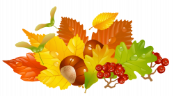 Chestnut clipart transparent