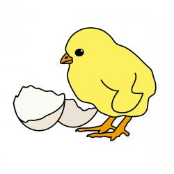 Canary clipart spring animal