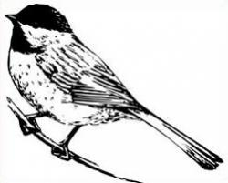 Bird clipart chickadee