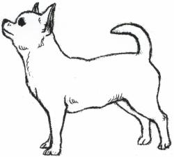 Chihuahua clipart drawing