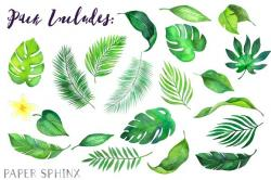 Tropics clipart tropical leave