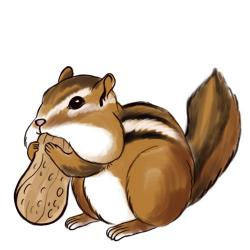 Drawn squirrel chipmunk