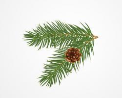 Drawn pine cone