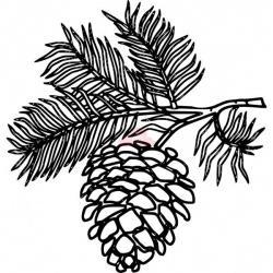 Drawn pine cone pine tree
