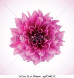 Chrysanthemum clipart purple flower