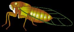 Ant clipart cicada