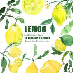 Lemon clipart bitter