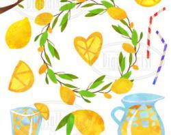Citrus clipart summer item