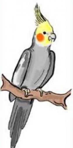 Cockatiel clipart