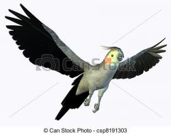 Cockatoo clipart drawing