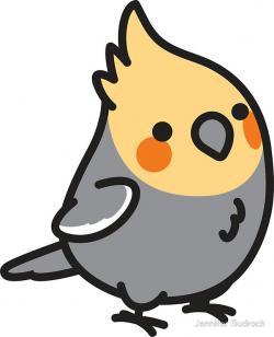 Cockatiel clipart boy