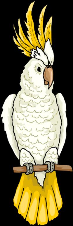 Cockatoo clipart australian