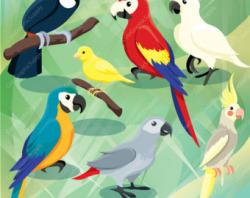 Toucanet clipart jungle