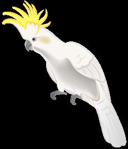 Cockatiel clipart cockatoo