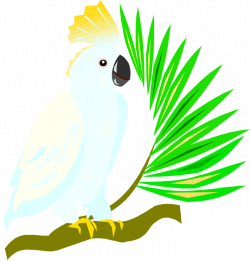 Cockatoo clipart parrot