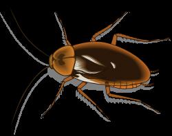 Cartoon clipart cockroach