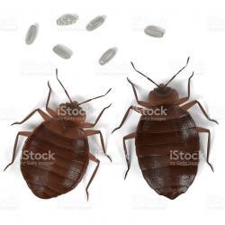 Cockroach clipart dreadful