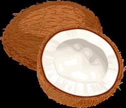 Coconut clipart