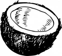Coconut clipart coco