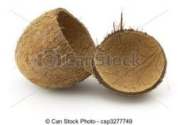 Coconut clipart coconut shell
