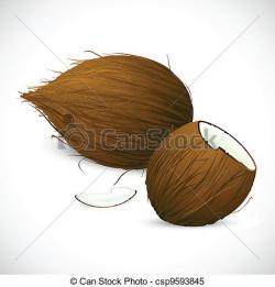Coconut clipart sketch