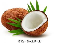 Coconut clipart vector