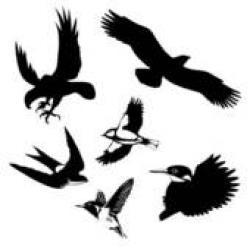 Condor clipart baaz