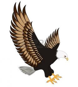 Harris Hawk clipart