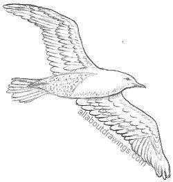 Drawn seagull