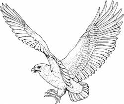 Drawn falcon flying