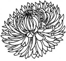 Chrysanthemum clipart black and white