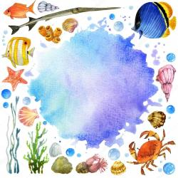 Algae clipart sea anemone